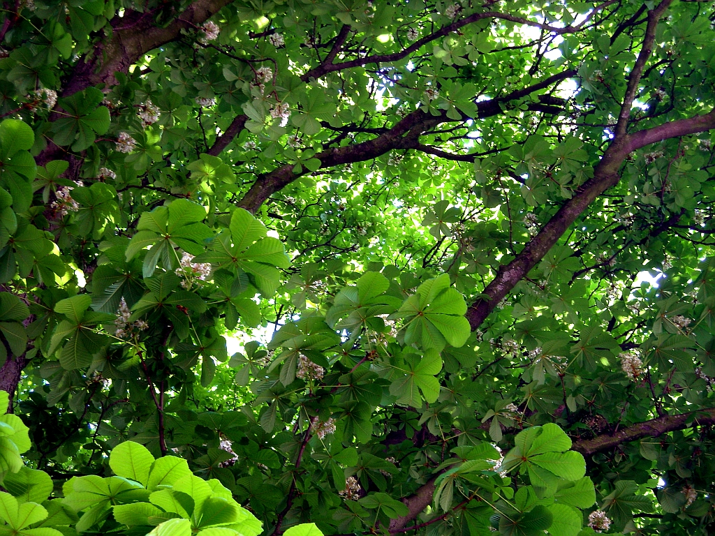 Bäume: Blüten, Blätter, Früchte