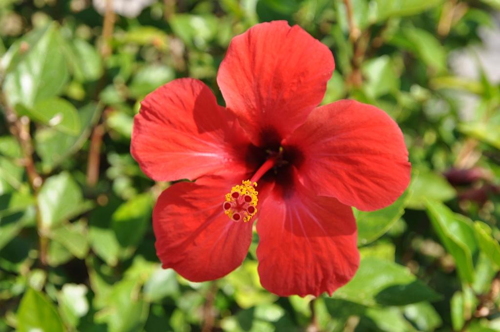 Rote >> Exotische Pflanzen - Blumen & Blüten