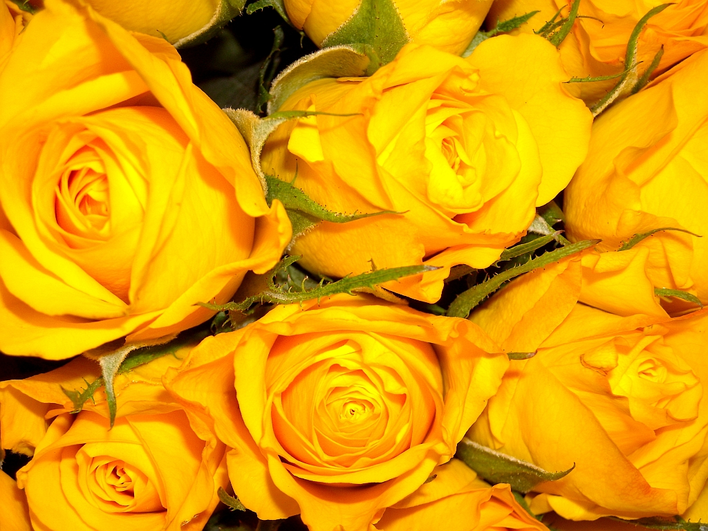 Gelbe Bilder fotos