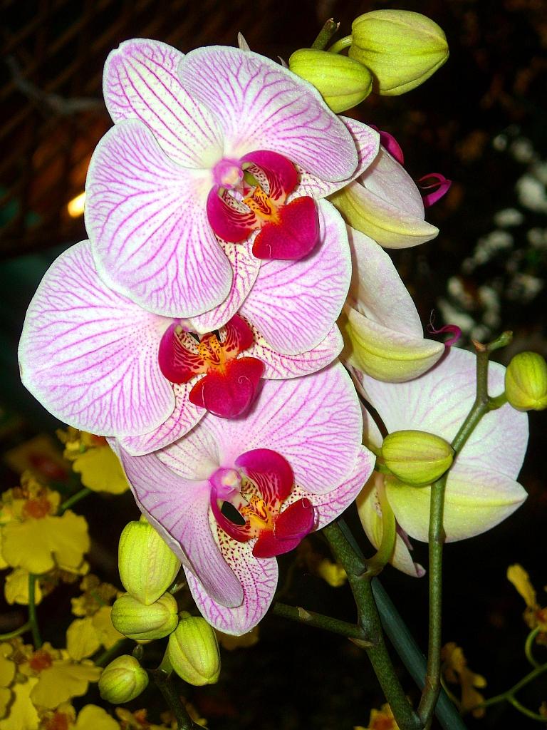Aufnahme einer weißen orchideen rispe