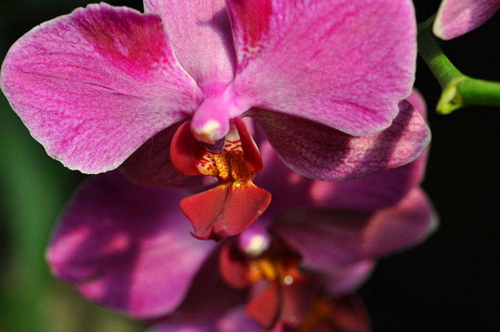 Orchideen - Edle Romantik