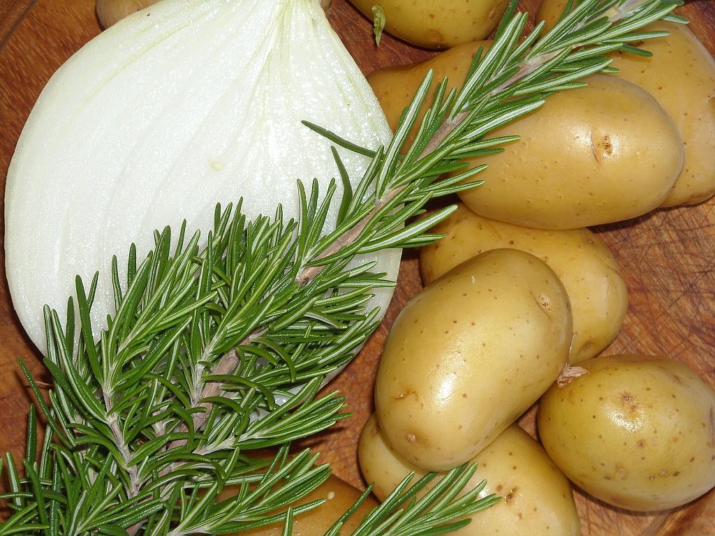 kartoffel sieglinde erntezeit
