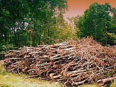 Ein ganzer berg feuerholz auf einer lichtung im wald