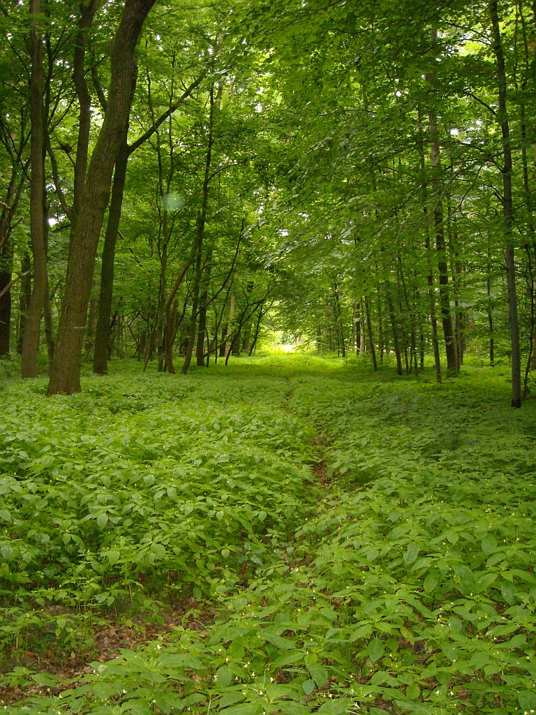 MeuSen Im Wald