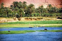 Ägypten am Nil