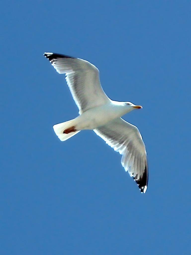 vogel  fotos  vögel
